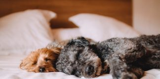 Some Of The Best Hotels In The World Are Now Accepting Pet Visitors