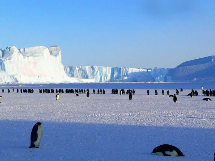 Scientists Say Thousands of Antarctica Emperor Penguin Chicks Were Wiped Out