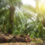 Palm Oil Is The Number One Reason for Deforestation